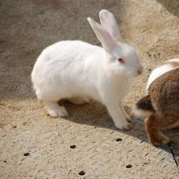 埼玉県宮代町 東武動物公園 ウサギ 動物 無料写真素材 あみラボ