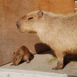 千葉県市川市 市川市動植物園 パビパラ 動物 無料写真素材 あみラボ