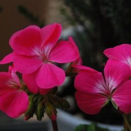 花の画像素材 アイコンの家