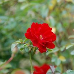 無料ダウンロード インコ フリー素材 無料アイコンの庭
